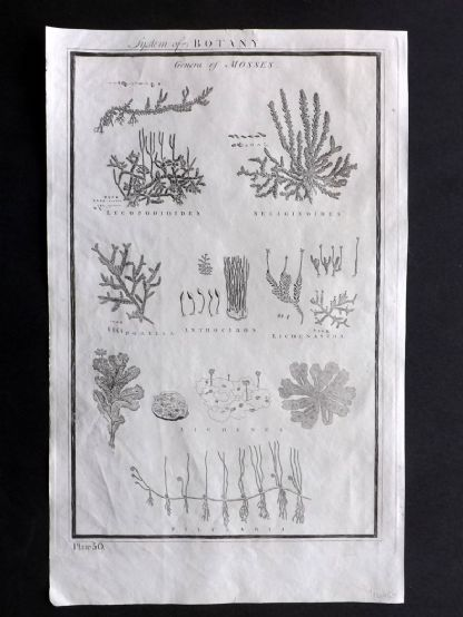 Howard 1796 Folio Antique Print. System of Botany 50 Genera of Mosses
